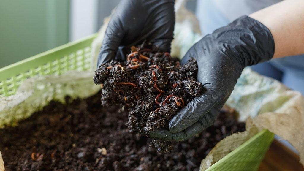 worm composting, vermicomposting